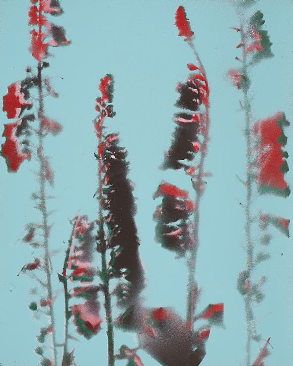 From the series: digitalis purpurea
